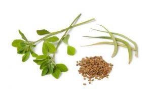 fenugrec plante