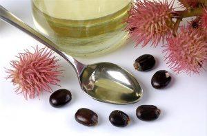 graines huile de ricin (Castor oil)