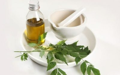 Huile de neem bio pour cheveux